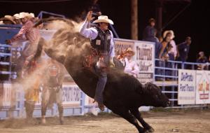 bull riding Eureka montana
